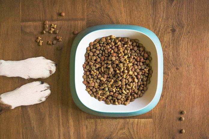 Żywienie i suplementacja zwierząt domowych